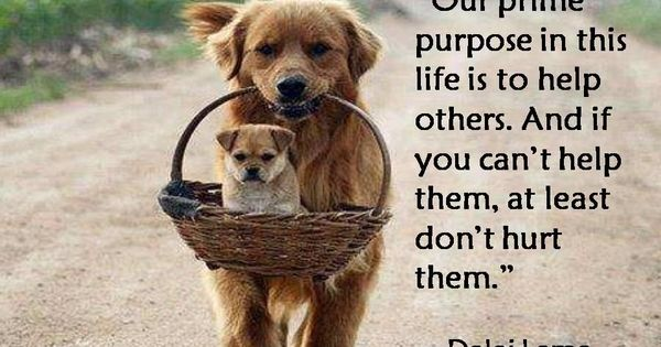 """Our prime purpose in this life is to help others. And if"