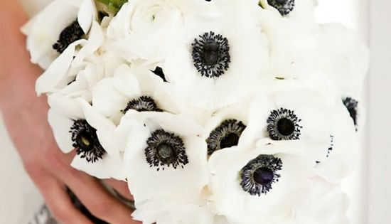 I'm in love with black & white anemones. perfect for a black