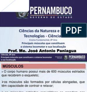 Sistema Muscular E Fundamental Ppt Sistema Muscular Ciencias