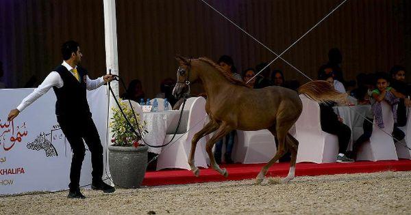 اختتام بطولة الشيخ فيصل بن حمد آل خليفة الرابعة لجمال الخيل العربية الأصيلة النتائج النهائية Horses Arabian Horse Animals