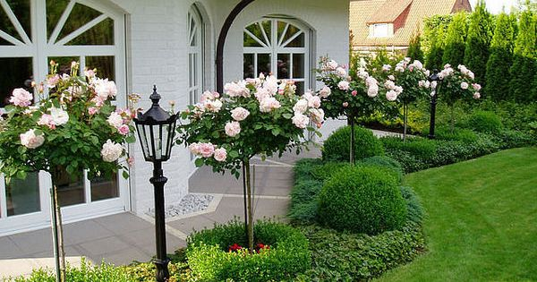 Secret Garden: Rose Topiaries, Boxwood And Stunning!