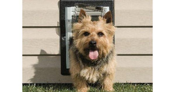 Pet Safe Wall Entry Pet Door Stuff I Need To Buy