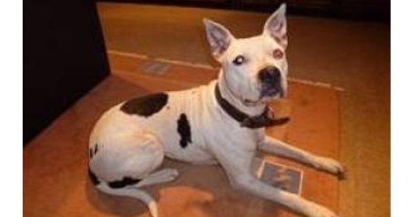 Pin Auf Listenhunde Suchen Ein Zuhause German Bsl Shelter Dogs