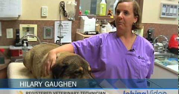 San Diego Humane Society Spca Jobs In San Diego Inside Jobs Com Humane Society Animal Shelter Animal Lover