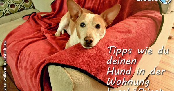 wie besch ftige ich meinen hund in der wohnung dog. Black Bedroom Furniture Sets. Home Design Ideas
