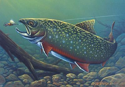 Brook Trout Jumping Out Of Water The