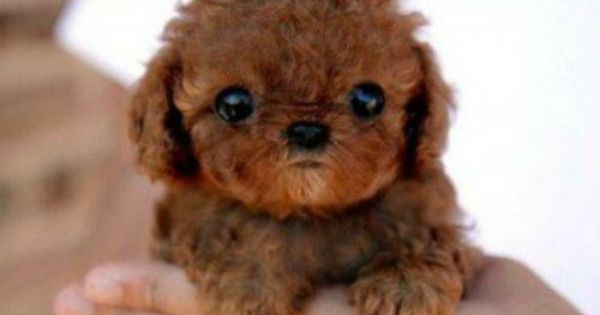 Cutest Puppy Ever in the World | ... , animals, baby, cute,