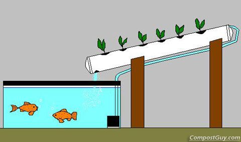 How To Make Your Own Aquaponics System Affordable And Easy