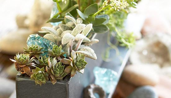 #Succulents Jewel box garden centerpiece