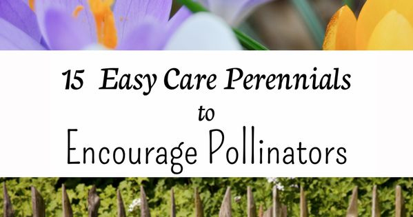 15 easy care perennials to encourage pollinators for Easy care perennial plants