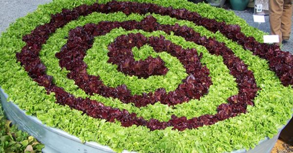 Lettuce spiral, great idea! Garden ideas