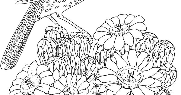 free printable coloring page arizona state bird and flower cactus
