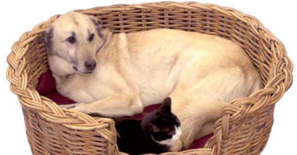 Wicker Dog Basket Wicker Dog Bed Pet Baskets Dog Beds Uk Dog Basket Wicker Dog Bed