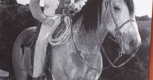 Marshall Dillon's buckskin horse   Equines: Horses ...