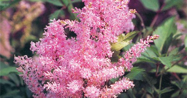12 vivaces sans entretien qui fleurissent tout l 39 t for Entretien plantes vivaces