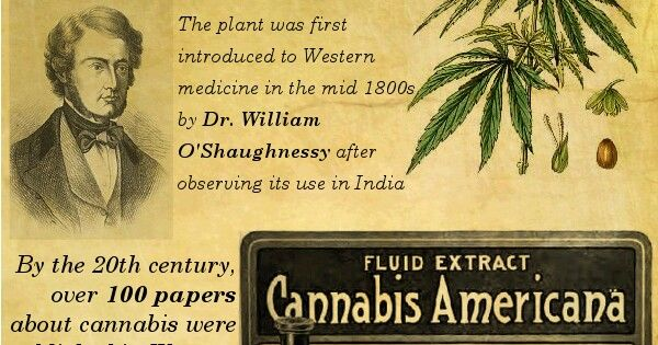 an introduction to the history of marijuana 2015-06-02 they say marijuana is a helpful medicine they say it makes you calm down and feel good they also say that it isn't as dangerous or harmful as alcohol and other drugs those are some reasons why they want to legalize.