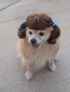 20 Sassy Dogs With Ponytails Cute Puppies Dog With Wig Crazy Dog