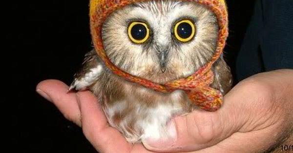 my what big eyes you've got! cute baby owl