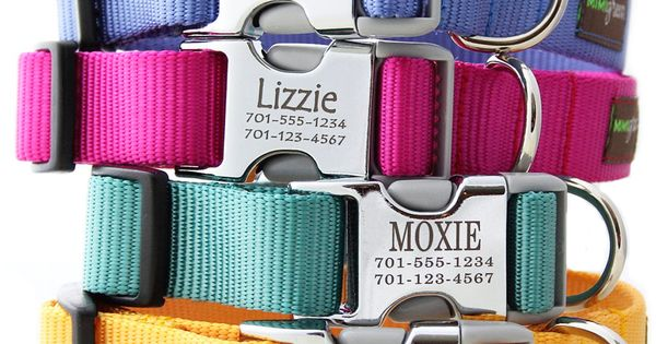 Personalized dog collars - No jingling tags that scare kittie....someday when we