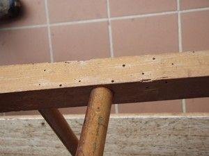 Como Acabar Con Las Polillas De La Madera Di Adios A La Carcoma De Tus Muebles En Pocos Minutos Limpiar