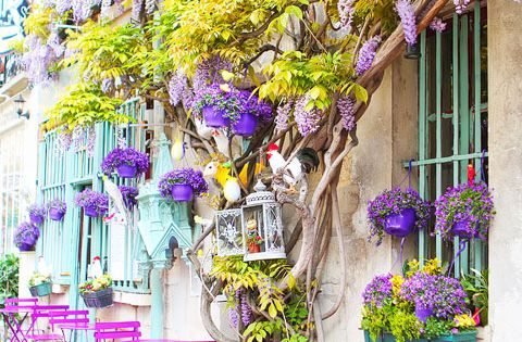 The lovely colors of Spring ~ Paris