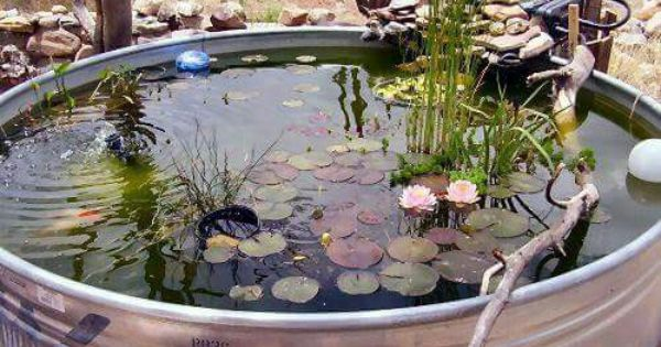 Tank pond pond life fish pinterest gardens and water for Garden pond life