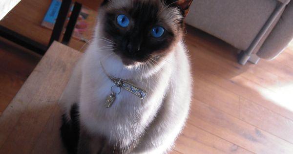 Cat Adoption Morgantown Wv