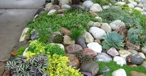 Rock garden - or for frontyard