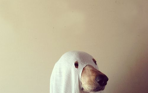boo! Halloween costume idea for dogs funny