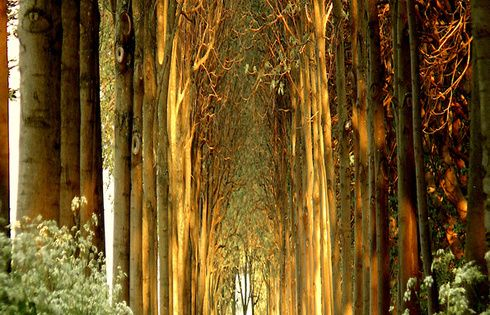 Tree Tunnel, Belgium >> what a great place to walk! ....amazing looks