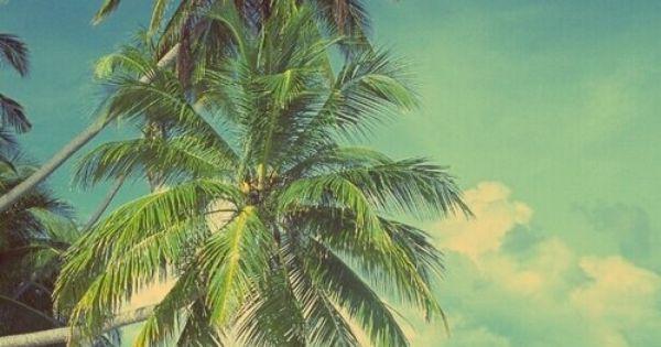 plage palmiers et coquillages surf pinterest t. Black Bedroom Furniture Sets. Home Design Ideas