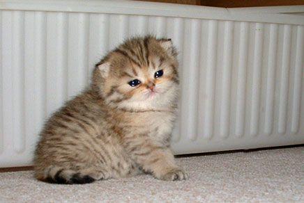 Pin On Baby Kit Kats