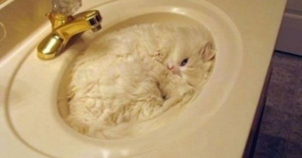 Stealth Level 87 (white cat in white sink)