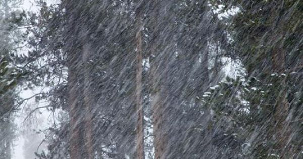 Lodgepole Pines In Snowstorm Winter Park Colorado Inverno Pinterest Winter Park Colorado