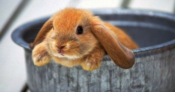 No Matter How Cold The Winter おしゃれまとめの人気アイデア Pinterest Karen Wilbanks かわいい動物の赤ちゃん かわいいウサギ ペット用品