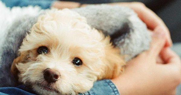 Pet Adoption Near Me Free Pet Adoption Near Me Pet Adoption Rescue Dogs For Adoption