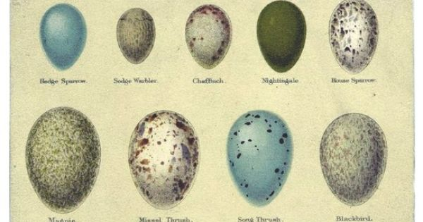 Google Easter Eggs List >> Egg identification chart. #oology #egg #birdegg | eggs ...
