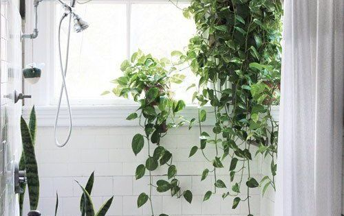 Add a little green plants in the bathroom bathroom for Low maintenance green plants
