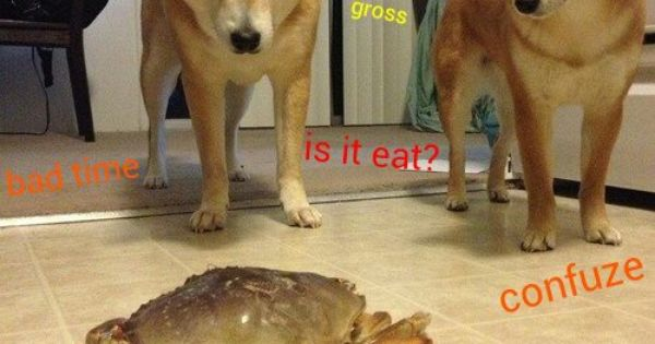 Wow Such Scary Wow Is It Eat Wow Doge Pinterest