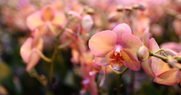 wedding ideas on a budget diy orchid inspiration orchid 27718