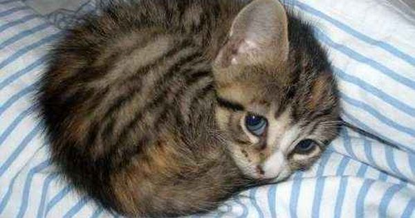 Cute baby kitten!! Looking as cute as a baby!! Love the blue