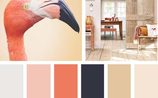 Color naranja flamingo paletas de color pinterest for Paleta de colores para paredes interiores