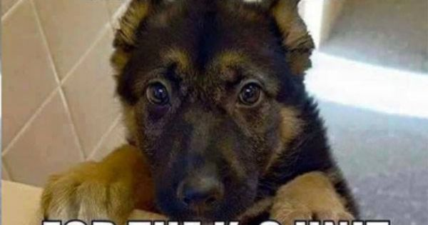 ƹ ӝ ʒ With Images Funny Dog Memes Cute Funny Animals