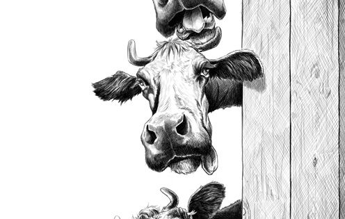 Animaux Arts Pinterest Cow Wood Burning And Pyrography