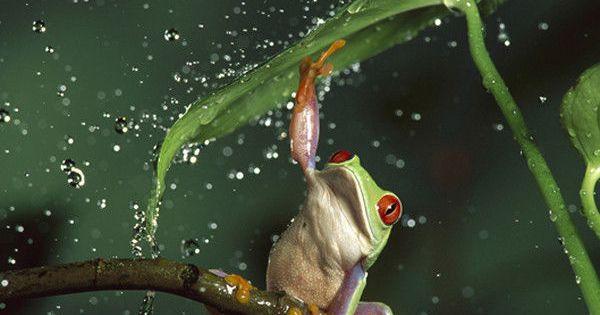 V Frog Kpm You always need...