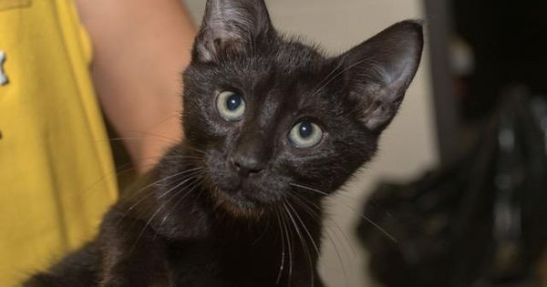 Tom Id A460339 Urgent Located At Harris County Animal Shelter In Houston Texas I Am Going To The Next Mobile Ad Gatti