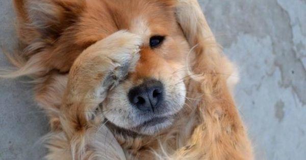 cutie doggie