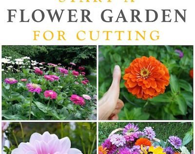 Best flowers for all summer color lots of blooms great for Low maintenance summer flowers