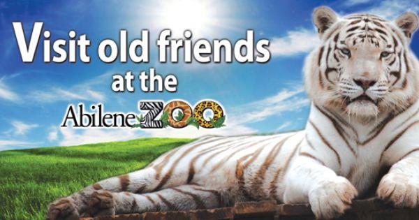 Abilene Zoo 2070 Zoo Lane Abilene Tx They Have A Conservation Program For Ocelots Abilene Zoo Abilene Zoo