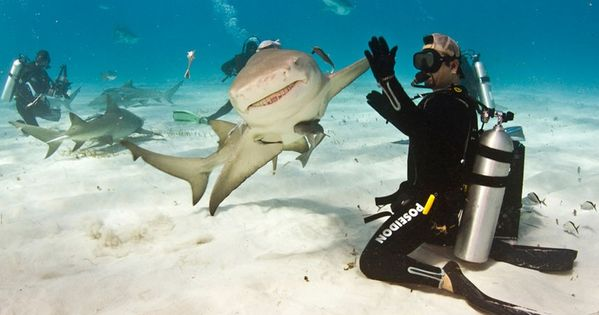 High five a Shark Like a Boss!